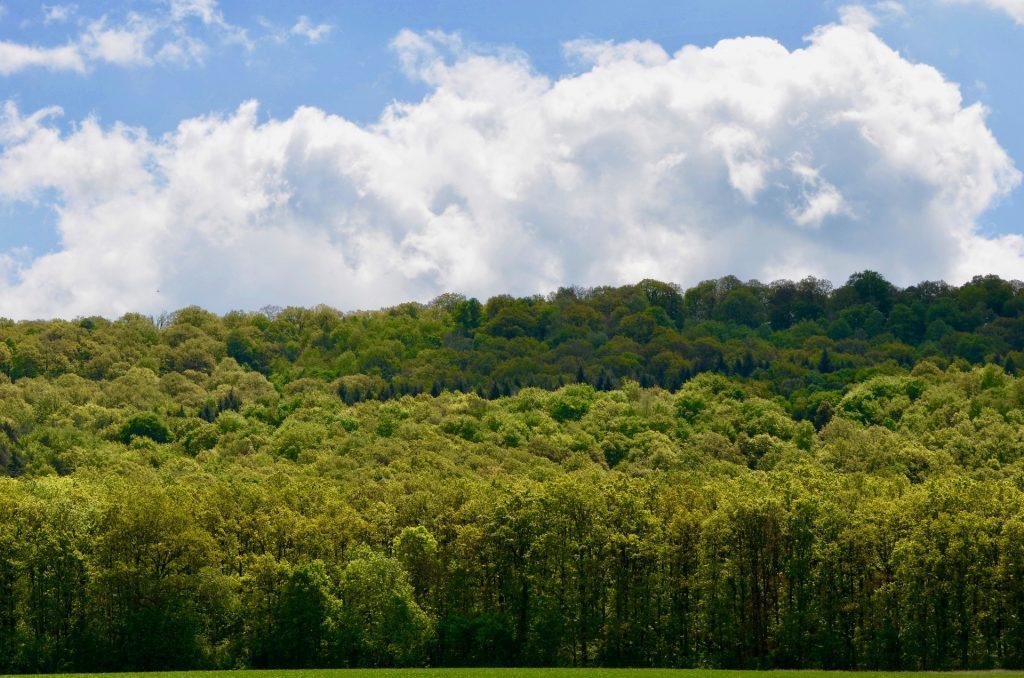 Althusmann begrüßt Modell zur CO2-Prämie für Ökoleistung der Wälder